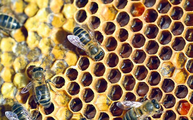 abelles - La Veu de l'Anoia - VeuAnoia.cat