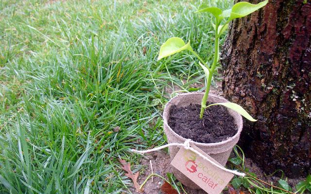 planta ecologica ecofira calaf 2016 - La Veu de l'Anoia - VeuAnoia.cat