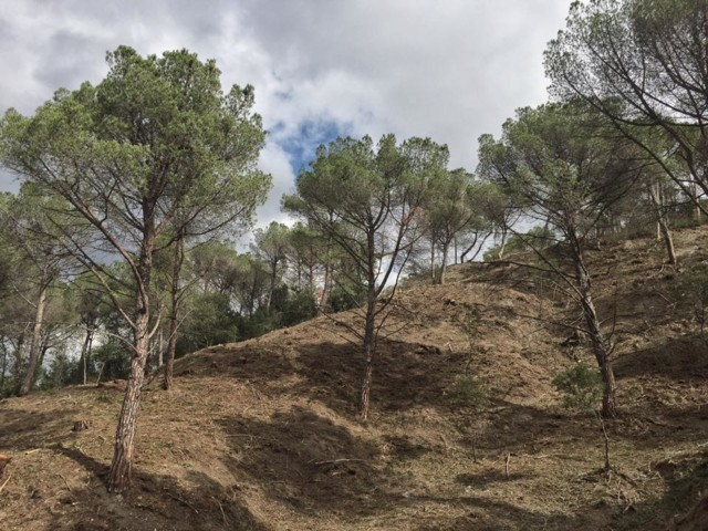 franja-perimetral-forestal-incendis-veuanoia-vallbona